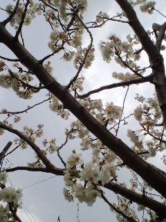 咲き乱れ〜