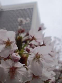 お花見とタコパー