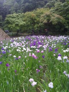 紫陽花を見に♪